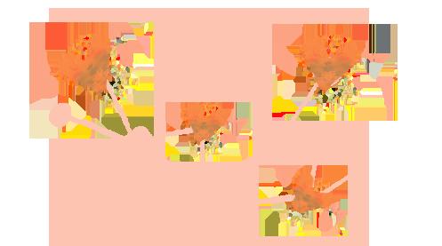 INTEGRAL-area-DONACION